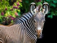 Journee-decouverte-au-zoo-de-Mulhouse Mulhouse
