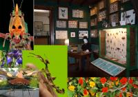 Idée de Sortie Bugeat Cité des Insectes : Musée et Parc nature