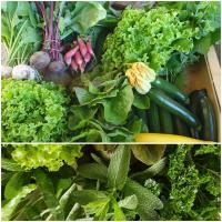 Magasin Nîmes Biopop - Fruits et Légumes BIO