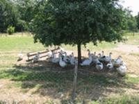 Idée de Sortie La Douze La ferme de Puygauthier