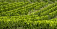 Evenement Bordeaux Portes ouvertes dans les vignobles bordelais