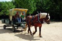 Evenement Poitiers ANNULE PONEY CLUB BOIS SAINT PIERRE : Découverte des arbres de la forêt en attelage