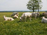 Evenement Franche Comté Le bon goût de l'élevage de viande.