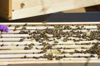 Evenement Franche Comté Visite d'exploitation apicole