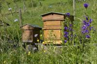 Evenement Aix les Bains Atelier Découverte et accueil de la faune des jardins
