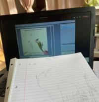 Evenement Lille Ateliers Dessin en visio / pour les enfants