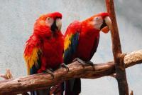 Evenement Poitiers PARC ANIMALIER BOIS DE SAINT PIERRE : Observez les perroquets et les perruches et participez à la confection d'un enrichissement