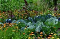 Evenement Tarn Cours gratuits pour apprendre à jardiner