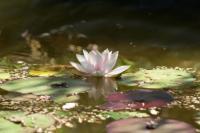 Evenement Loire Visite commentée et démonstration de teinture végétale