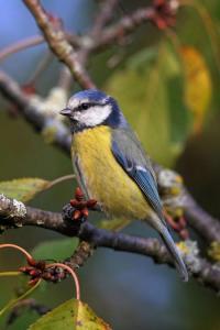 Evenement Ceignes Atelier créatif Les oiseaux au jardin
