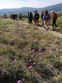 Evenement Malijai Randonnée Plantes aromatiques et médicinales du piémont sud de Lure