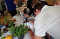 Evenement Auribeau sur Siagne Descriptif des ateliers du botaniste