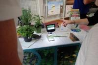 Evenement Auribeau sur Siagne Les plantes médicinales - version grand jeu familial