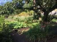 Evenement Molinet Visite libre du jardin de la Maison Marais et du potager de la Semence
