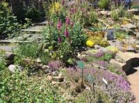 Evenement Saint Geniez d'Olt Herbier vivant de la flore de l'Aubrac