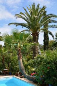 Evenement Auribeau sur Siagne Le jardin aux mille et un palmiers