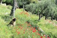 Evenement La Rochette Visite commentée d'une authentique terre de parfumeur