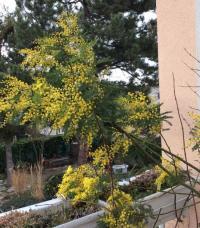 Evenement Loire Découverte du jardin et visite commentée avec la propriétaire-jardinière