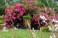 Evenement Brégnier Cordon Visite d'un jardin au naturel
