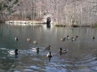 Evenement Sigoyer Exposition Charance 2020: Les dessous du lac