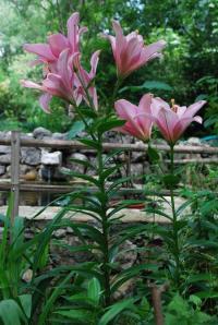 Evenement Contes Visite du jardin de l'Argelière à La Gaude