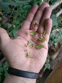 Evenement Castillon Présentation des interactions et mutualisations entre les insectes et les végétaux.