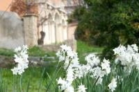 Evenement Castillon Jardins de Roseland : Le gai savoir