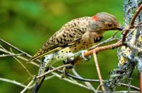 Evenement Armissan Reporté : Conférence : découvrons les oiseaux