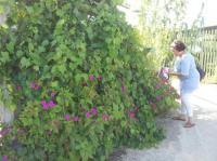 Evenement Pont de l'Isère Visite du jardin des jardins partagés de l'Oasis-Rigaud à Valence