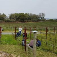 Evenement Bize Minervois Les plantes utiles en viticulture