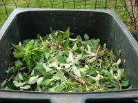 Evenement Haute Garonne Collecte des déchets verts