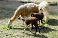 Evenement Poitiers PARC ANIMALIER BOIS DE SAINT PIERRE : Découvrez nos petits et grands animaux herbivores domestiques