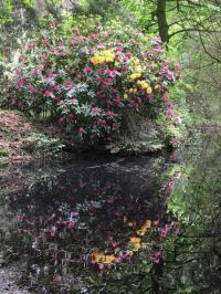 Evenement Foissiat Rendez-vous dans le Parc paysager de la Teyssonnière