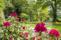 Evenement Le Chambon Visite du parc et des jardins du château de Figon