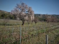 Idée de Sortie Orgon Le vignoble des Alpilles, rêve antique (Circuit 3 / Est)