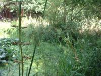 Idée de Sortie Bagnolet Jardin naturel  Pierre Emmanuel