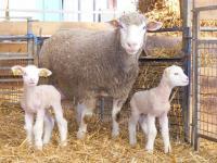 Idée de Sortie Ménil Annelles Les volailles et agneaux de la ferme