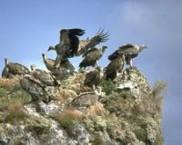 Idée de Sortie Rivière sur Tarn Ligue pour la protection des oiseaux
