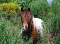 Idée de Sortie Monsaguel Centre Equestre de la Cavale