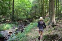 Idée de Sortie Pure Le Grand Hez, une forêt aux secrets bien gardés...
