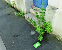 Evenement Deux Sèvres Jardin au naturel - déambulation La végétation aux pieds des murs