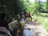 Idée de Sortie Fromy Relais Equestre des Récolets