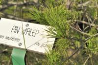 Idée de Sortie Vauvenargues Sentier botanique de Saint-Ser