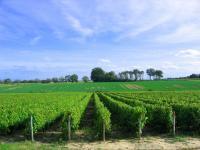 Idée de Sortie Brinay Entre vignobles et hameaux
