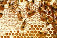 Idée de Sortie Maubert Fontaine Producteur de miel
