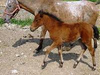 Idée de Sortie Sagelat Ferme Equestre Le Bugou