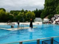 Evenement Loir et Cher Spectacles Les Maîtres des Airs et L'Odyssée des Lions de Mer au Zoo. Parc de Beauval