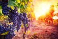 Evenement Bessas Les vignes réboussières
