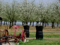 Idée de Sortie Margueron Saint-Astier-de-Duras, à travers vignobles et vergers de Duras