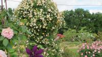 Jardin Pimpinellifolia Dordogne